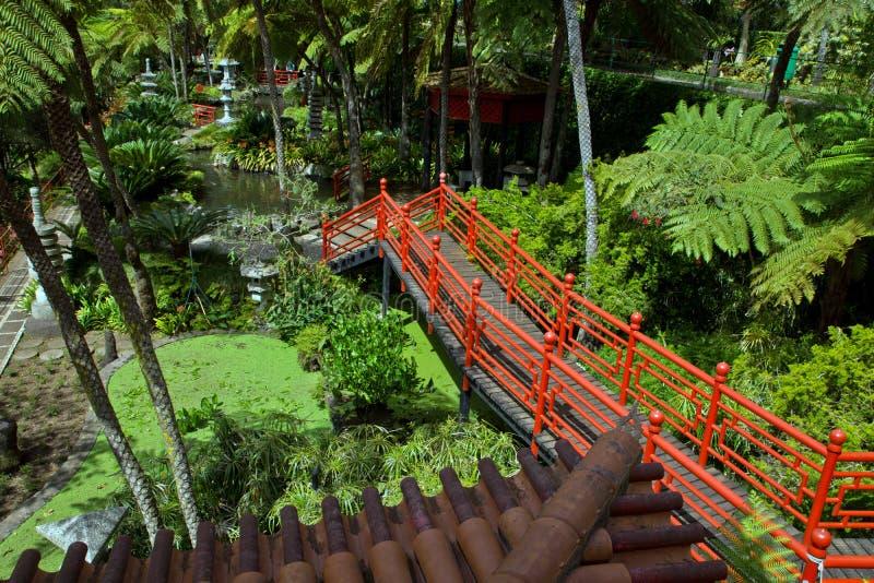 Tropische tuinen in Monte Palace stock foto's