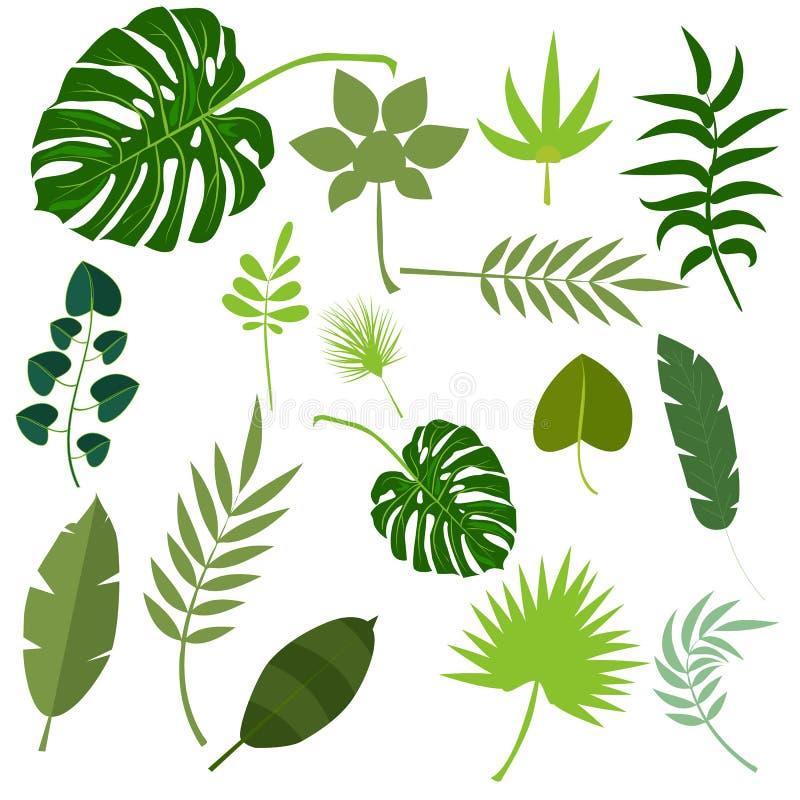 Tropische van de de zomer exotische wildernis van de bladerenpalm groene het blad vectorillustratie stock fotografie