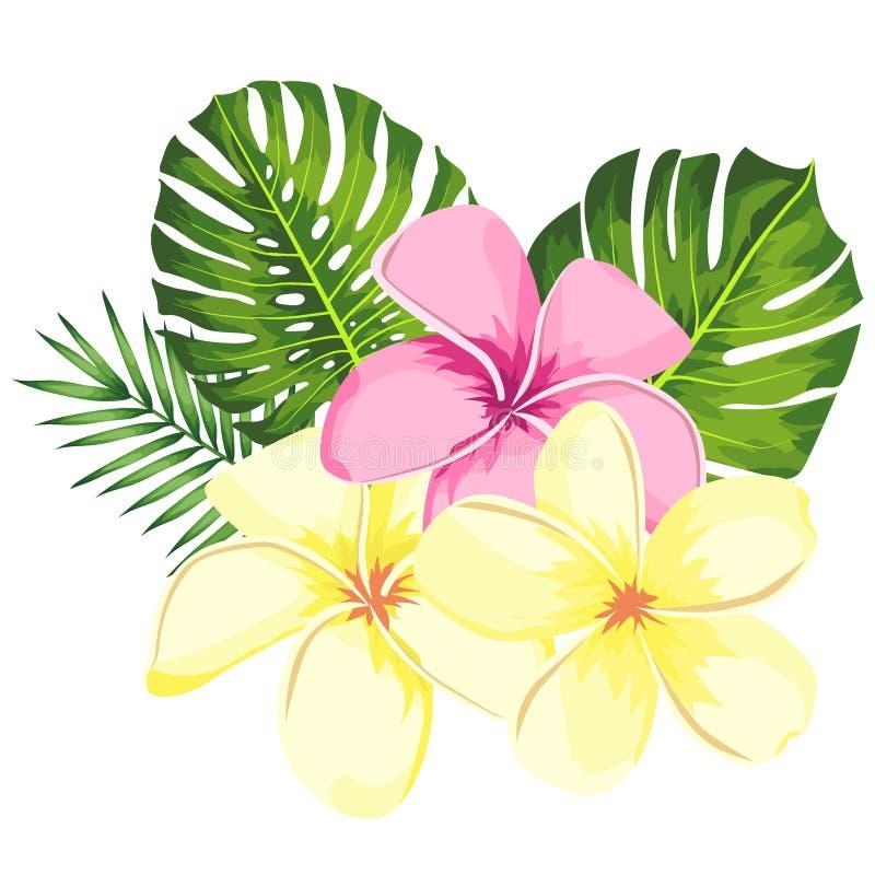 Tropische vector roze die plumeria bloeit, takken en bladeren voor bloemenkaartillustratie worden geplaatst Bloemboeket met exoti vector illustratie