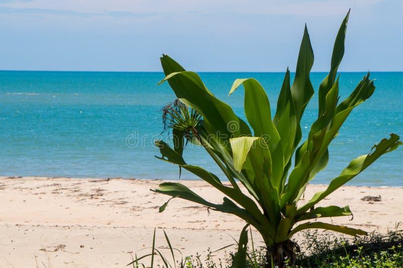 Tropische vegetatie stock afbeelding