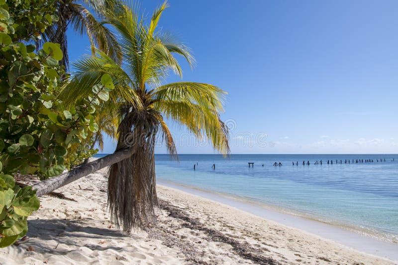 Tropische vegetatie met gebogen palm en duidelijke overzees stock fotografie