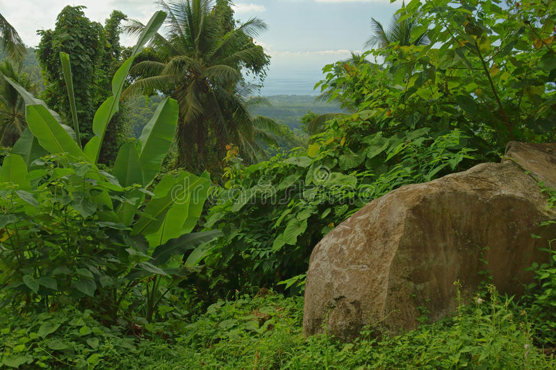 Tropische Vegetation lizenzfreie stockbilder
