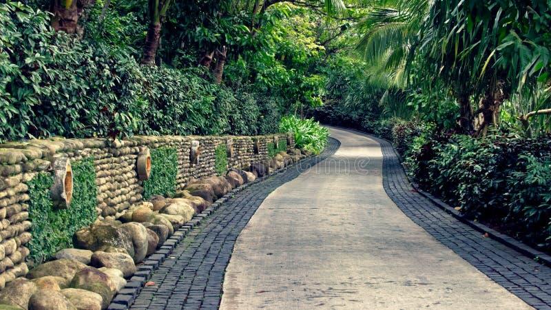Tropische Vegetation der Wegabflussrinne, Vietnam lizenzfreies stockfoto