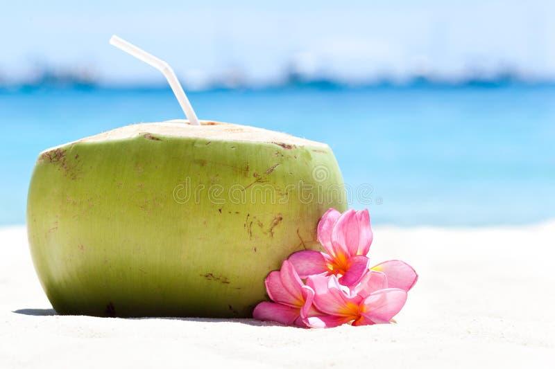 Tropische verse cocktail op wit strand stock fotografie