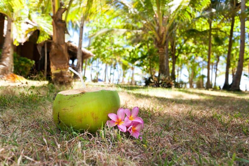 Tropische verse cocktail in wildernis stock foto