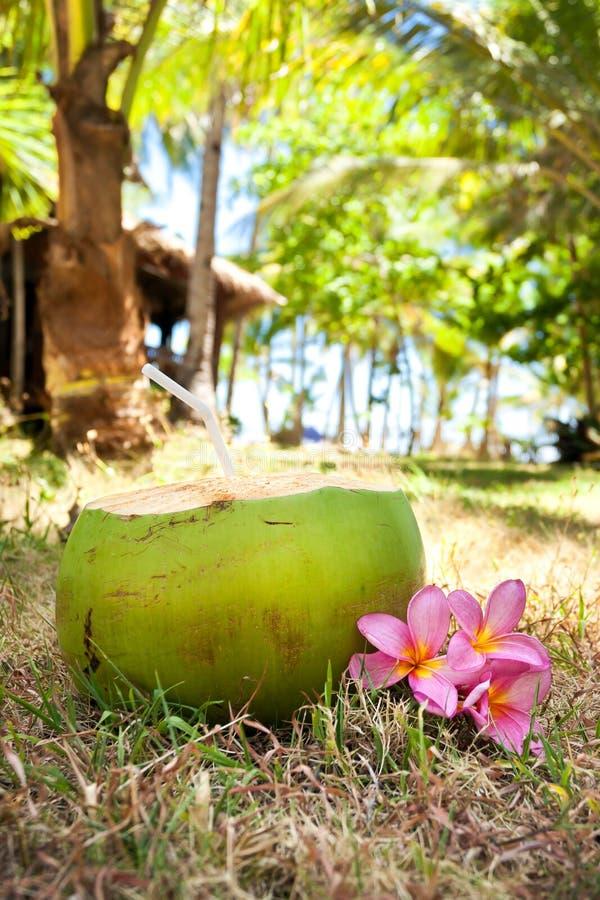 Tropische verse cocktail in wildernis royalty-vrije stock fotografie
