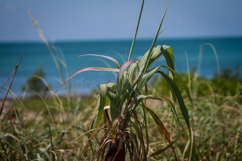Tropische Vision stockbilder