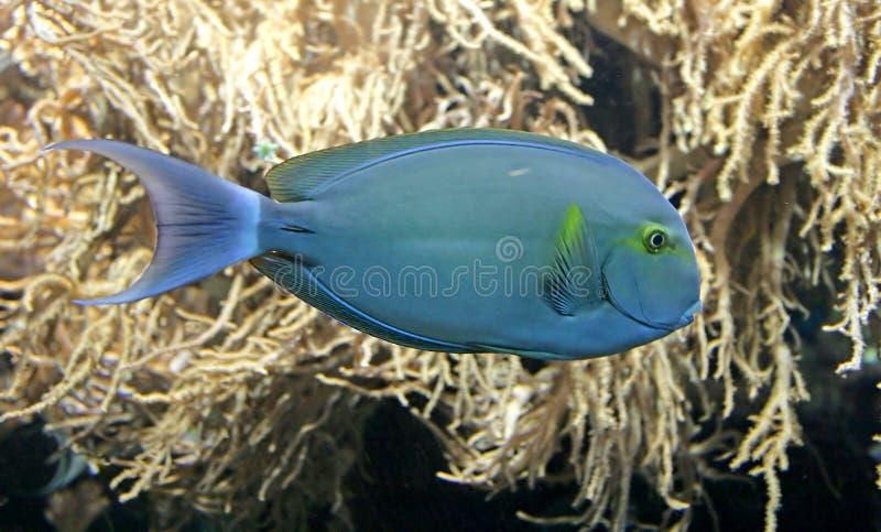 Tropische Vissen 3 stock fotografie