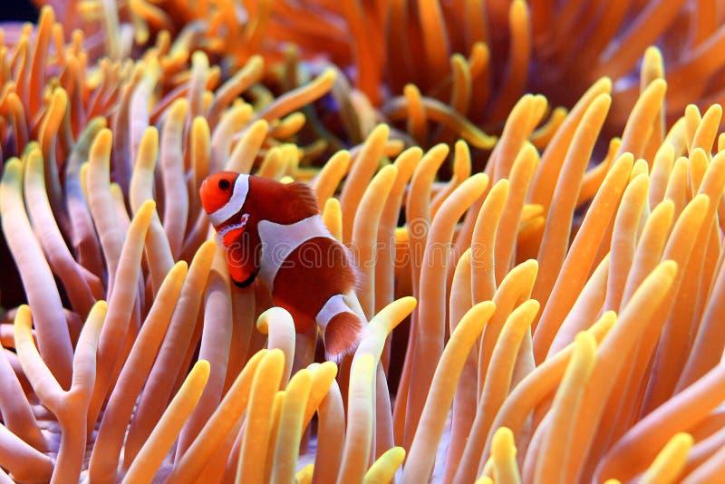 tropische vissen royalty-vrije stock fotografie