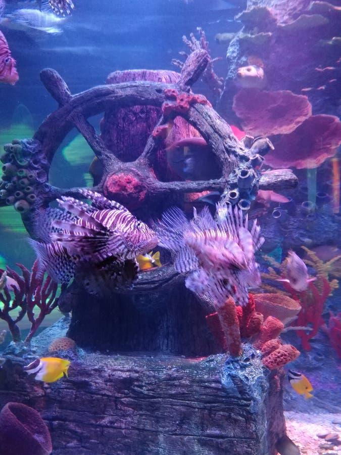 Tropische vissen in aquarium stock foto's