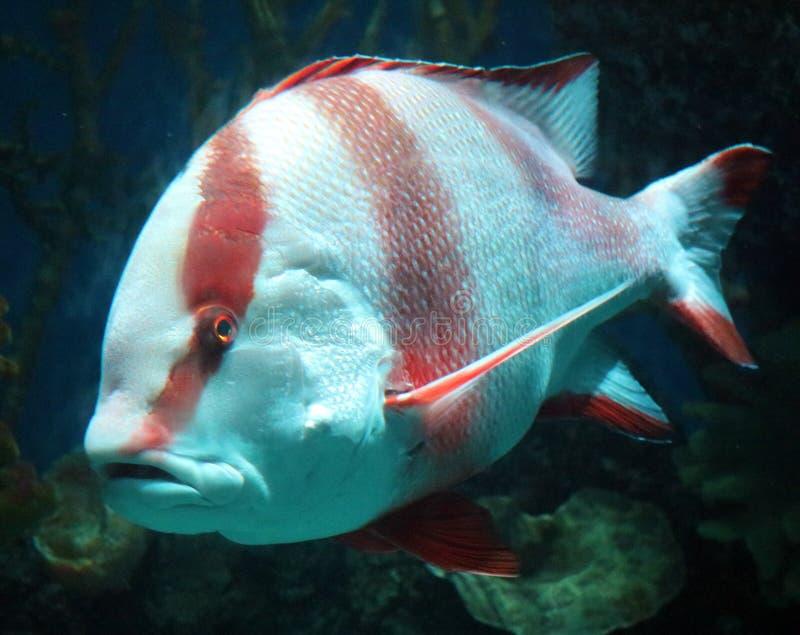 Tropische vissen in aquarium bij oceaan, overzees zout schepsel royalty-vrije stock foto