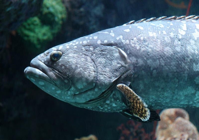 Tropische vissen in aquarium bij oceaan, overzees zout schepsel stock foto's