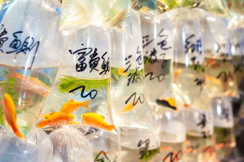 Tropische vissen voor verkoop bij de goudvismarkt van Hong Kong ` s Tung Choi Street, Mong Kok, Hong Kong stock foto's