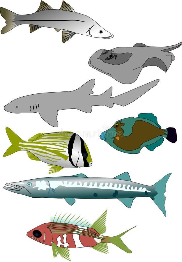 Tropische visseninzameling 1 royalty-vrije illustratie