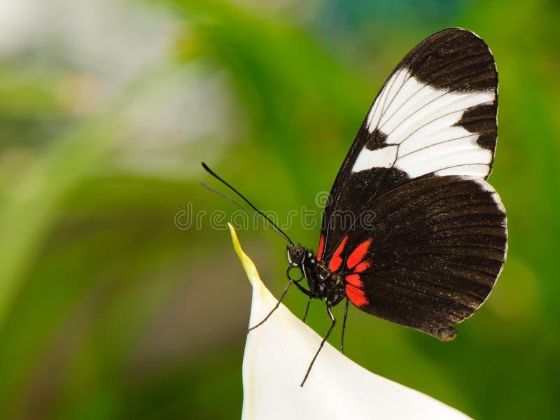 Tropische vlinder op blad stock afbeeldingen