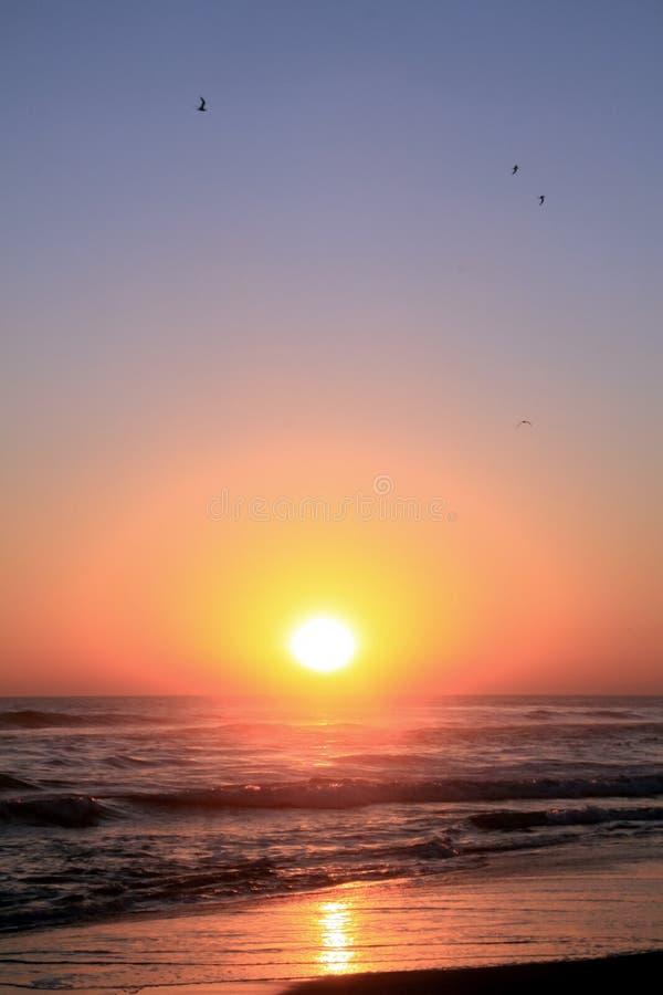 Tropische Vogel die over Vreedzame Oceaan in Gouden Zonsondergang vliegen stock fotografie