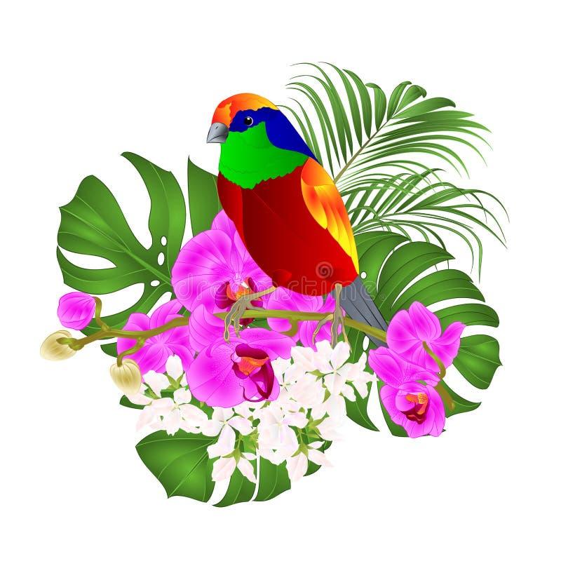 Tropische vogel die zich op een purpere orchidee Phalaenopsis en palm bevinden, philodendronon een witte vector editable illustra vector illustratie