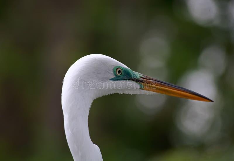 Tropische Vogel In Een Park In Florida Royalty-vrije Stock Afbeeldingen
