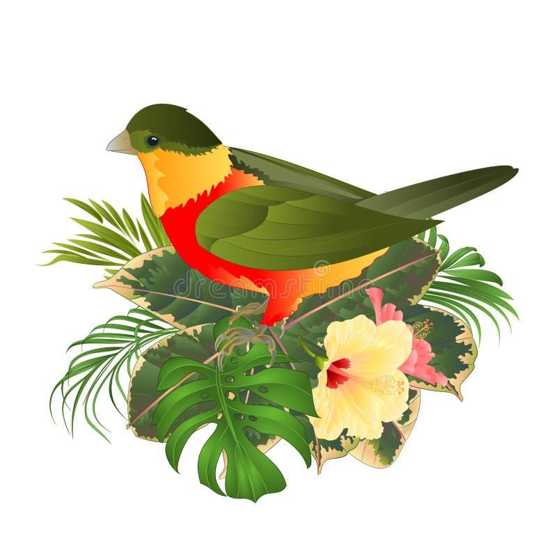 Tropische vogel leuke kleine grappige vogel en de gele en roze stijl van de hibiscuswaterverf op een witte uitstekende vector als vector illustratie