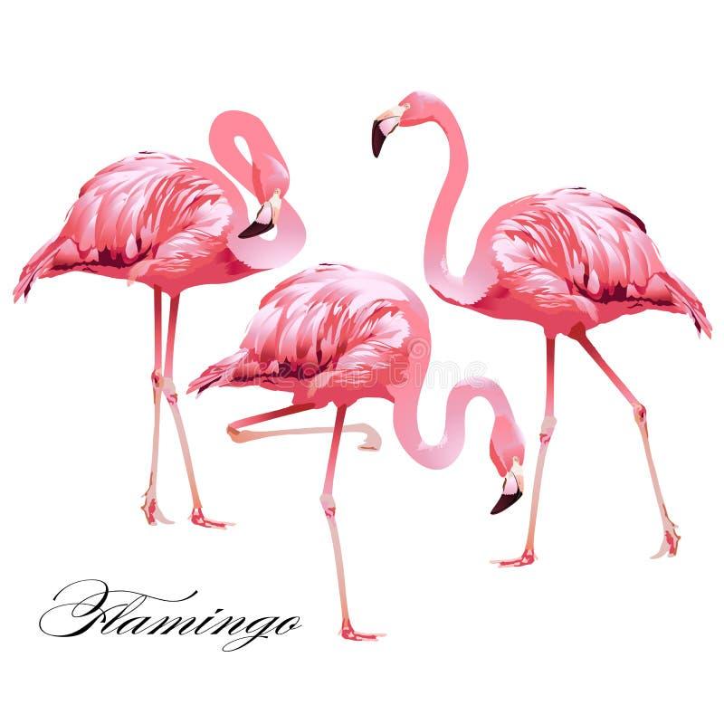 Tropische Vogelflamingo's royalty-vrije illustratie