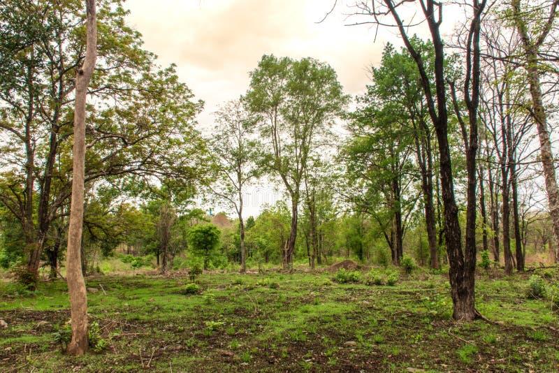 Tropische Wälder lizenzfreie stockfotos
