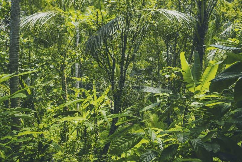 Tropische Waldansicht in asiatisches Land, grüne Naturbeschaffenheit, Dschungelansichthintergrund stockfotografie