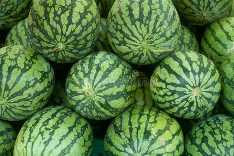 Tropische watermeloen royalty-vrije stock foto's