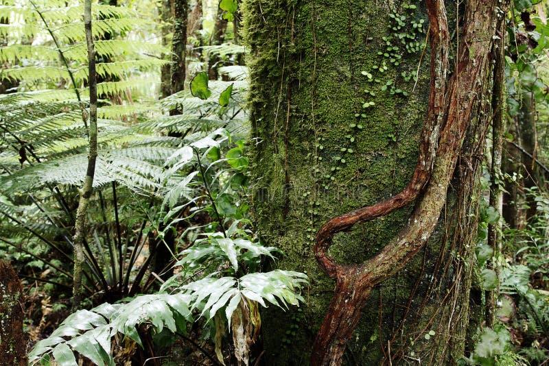 Download Tropische wildernis stock foto. Afbeelding bestaande uit tropisch - 29513668