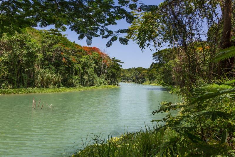 Tropische Wildernis en Rivier in Jamaïca stock afbeeldingen