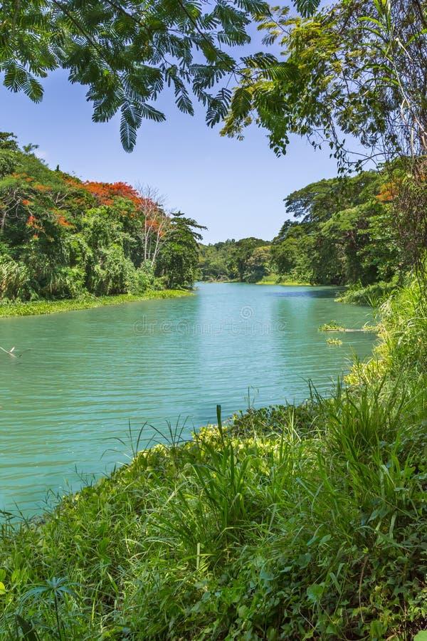 Tropische Wildernis en Rivier in Jamaïca stock afbeelding