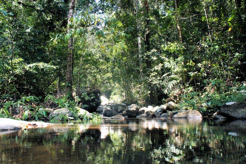 Tropische wildernis Regen Forest Philippines stock afbeelding