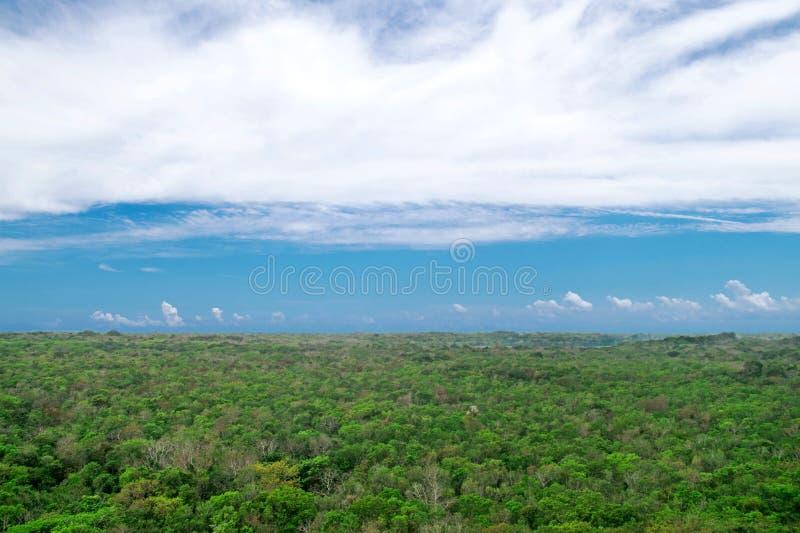 Tropische wildernis in Yucatan, Mexico royalty-vrije stock afbeelding