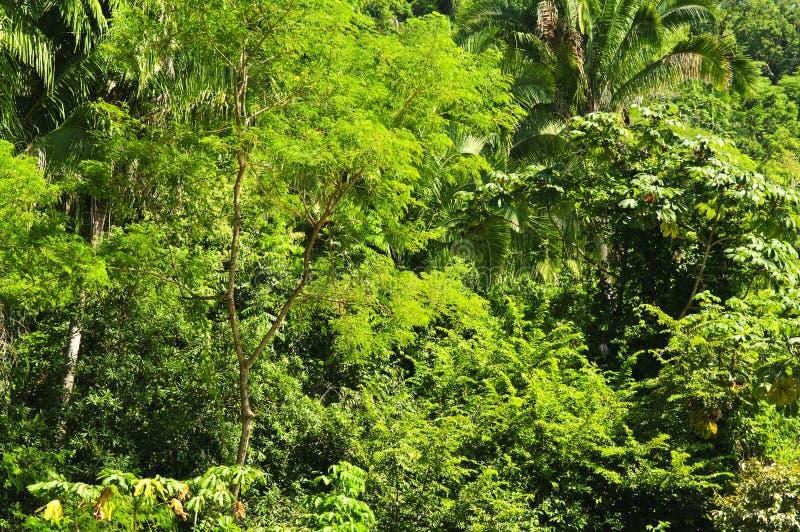 Tropische wildernisachtergrond royalty-vrije stock afbeeldingen