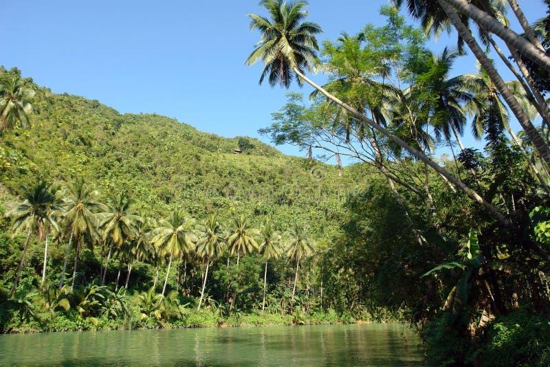 Tropische wildernisrivier stock afbeelding