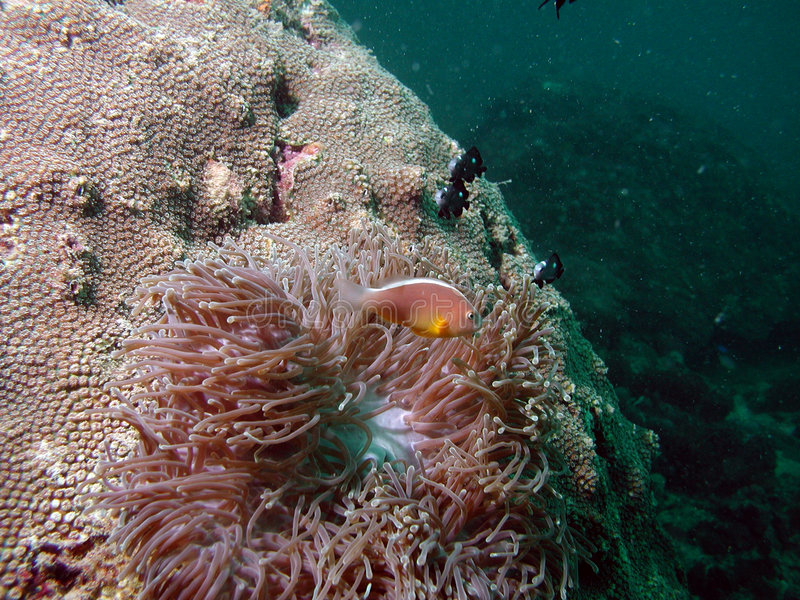 Tropische zeebedding stock fotografie
