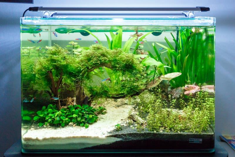 Tropische zoetwatervissentank royalty-vrije stock afbeelding