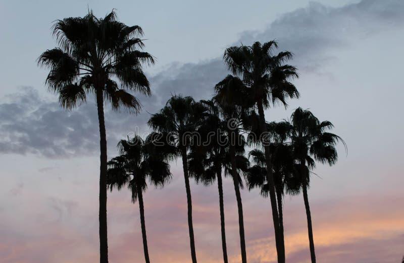 Tropische Zonsondergang met Palmen stock foto's