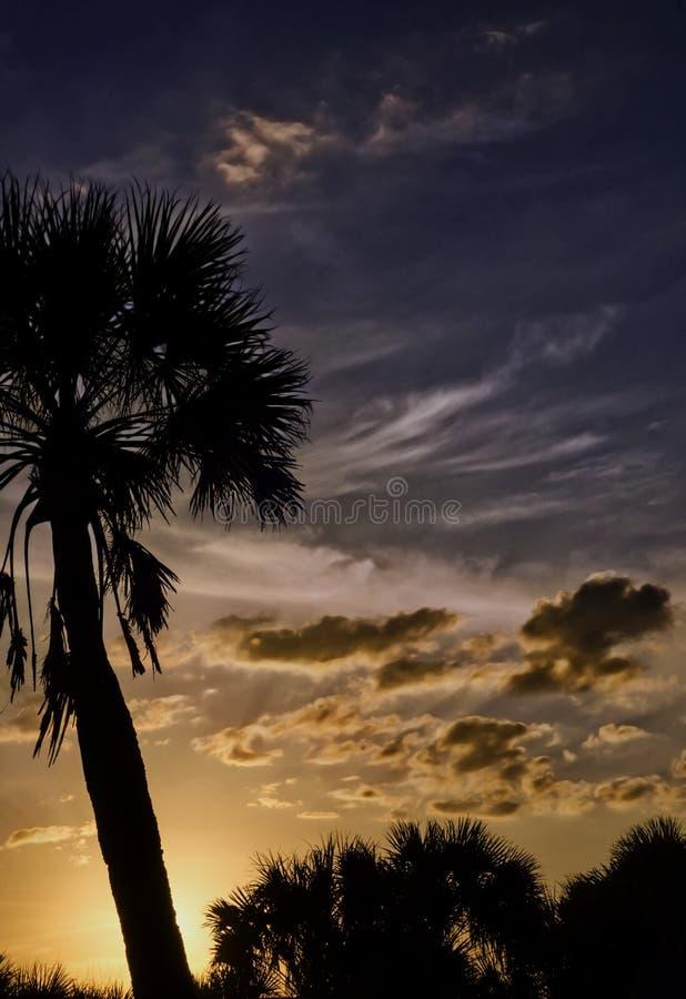 Tropische Zonsondergang met Palmen stock afbeelding