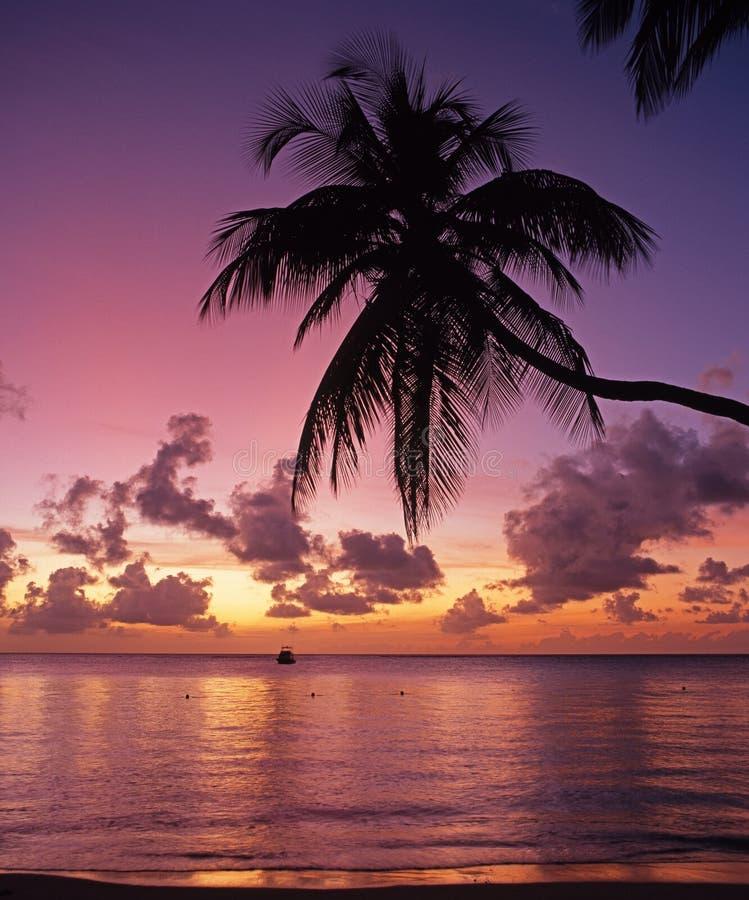 Tropische zonsondergang, Tobago. stock afbeeldingen