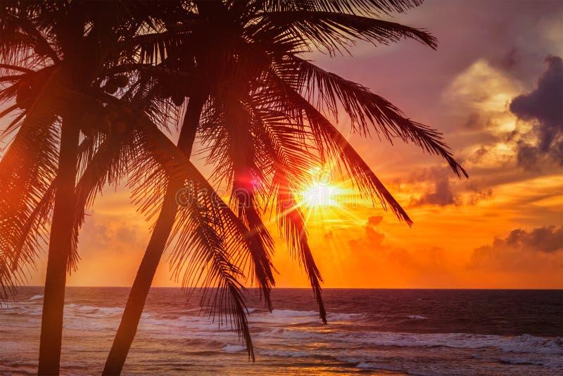 Tropische zonsondergangscène met palmen stock afbeeldingen