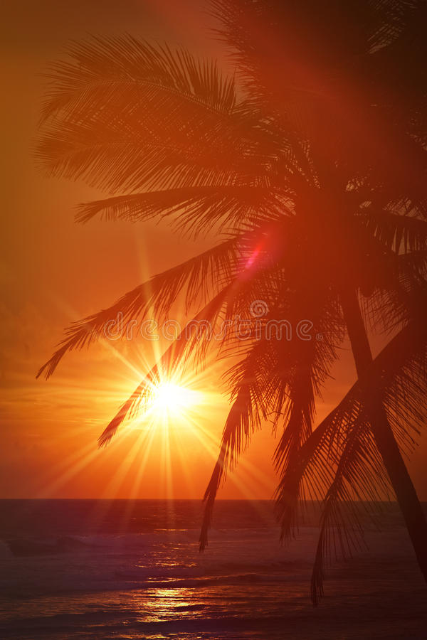 Tropische zonsondergangscène met palmen stock foto