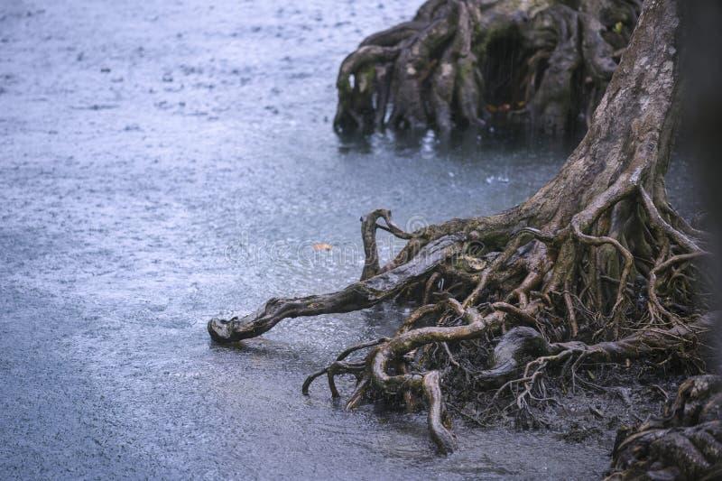 Tropische zware douche in regenwoud stock foto