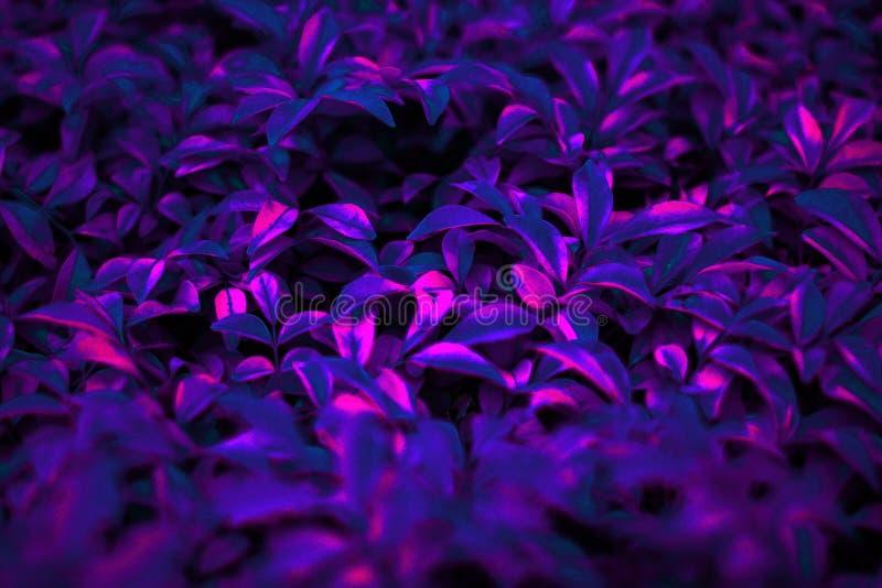 Tropische zwarte lichte gloeiende onscherpe bladeren stock afbeeldingen