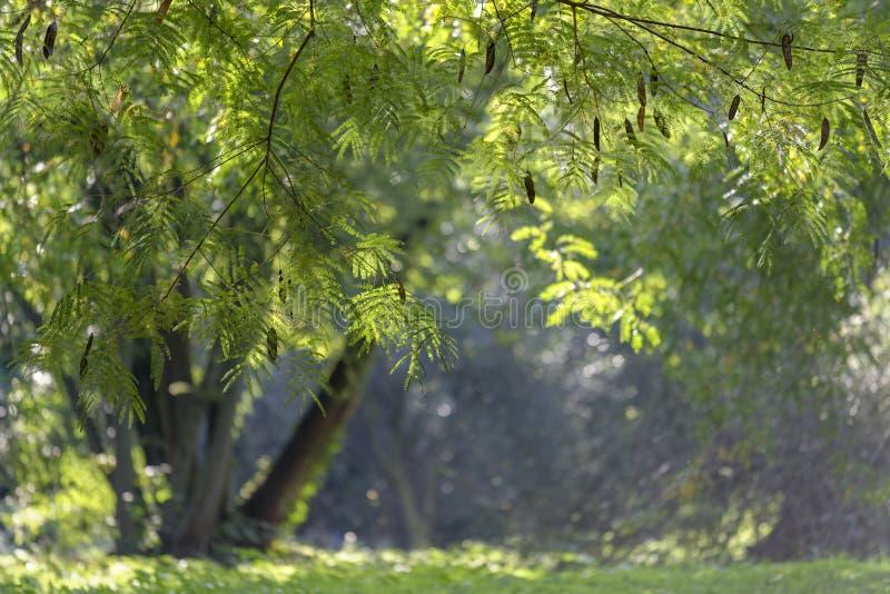 Tropischer Baum lizenzfreie stockfotografie
