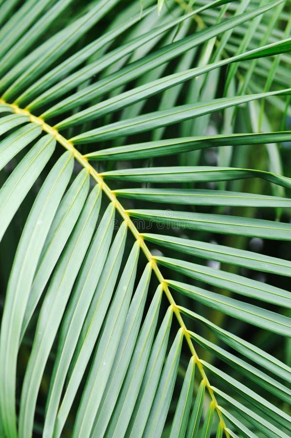 Download Tropischer Baum. stockfoto. Bild von tropisch, blätter - 26371816