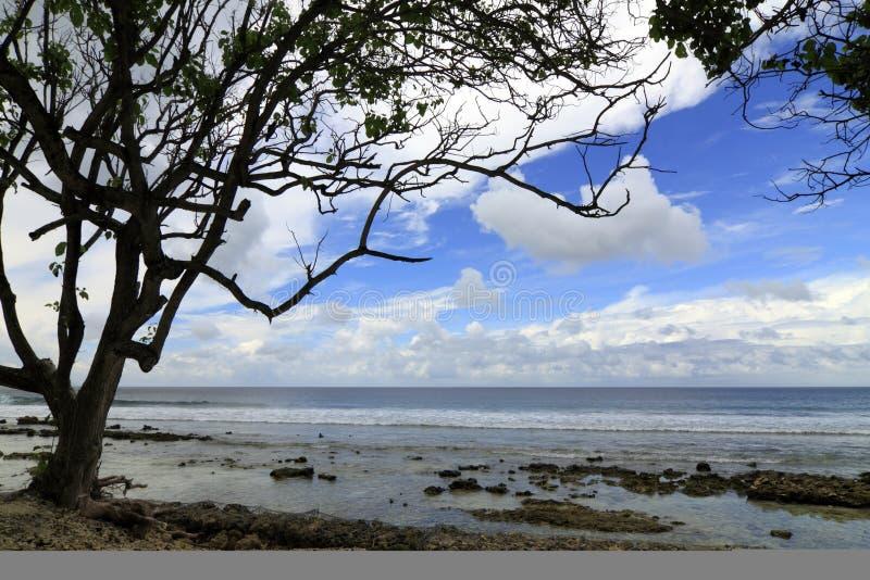 Tropischer Baum durch den Strand lizenzfreies stockbild