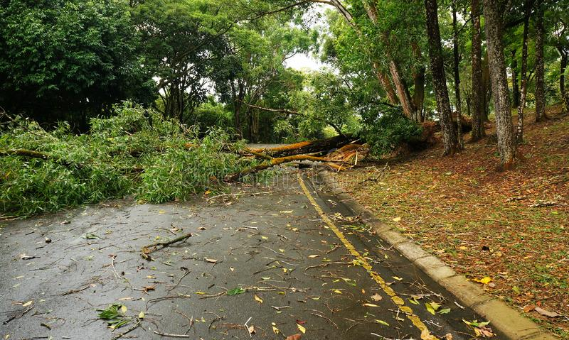 Tropischer Baum gefallen unten nach schwerem Sturm lizenzfreies stockbild