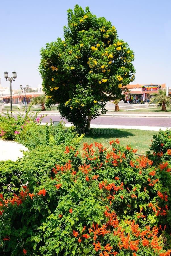 tropischer baum mit gelben blumen stockfoto bild von blau hotel 12601736