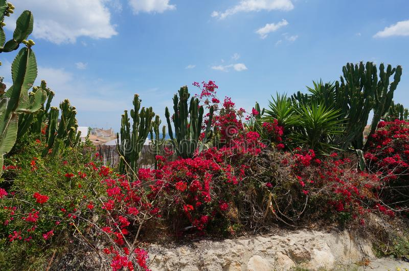 Tropischer blühender Garten mit Kaktus, Palmen und rotem Blütenbusch stockbild