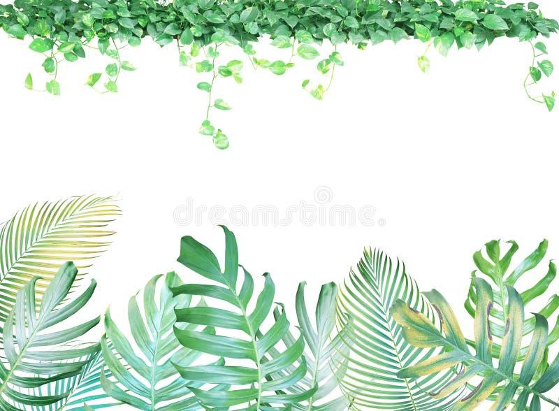 Tropischer Blattrahmen mit Monstera-Philodendron, Palmblätter vektor abbildung